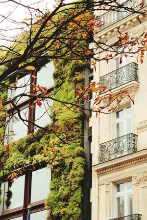 Nature vs humans Nature Vs Human Nature Vs City Nature Buildings Paris