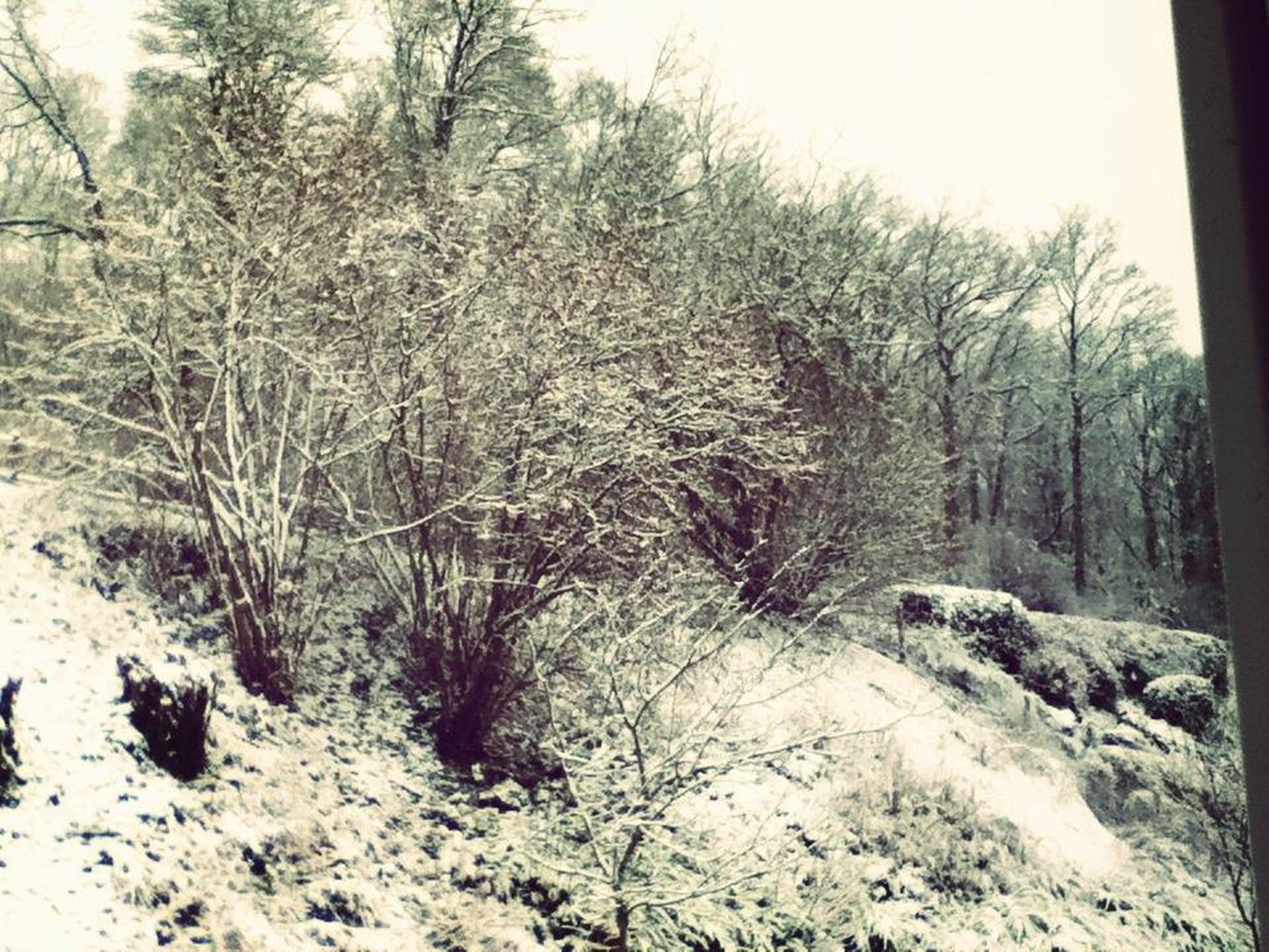 snow, winter, cold temperature, tree, season, weather, bare tree, tranquility, covering, tranquil scene, nature, landscape, beauty in nature, branch, scenics, frozen, field, covered, non-urban scene, growth