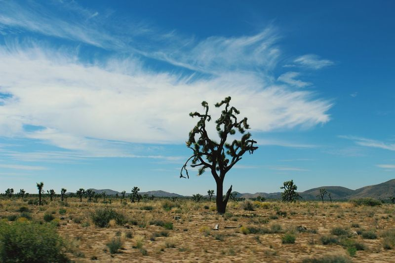 A nice thought provoking drive through the park. Joshua Tree National Park National Park Outdoors Camping Plain