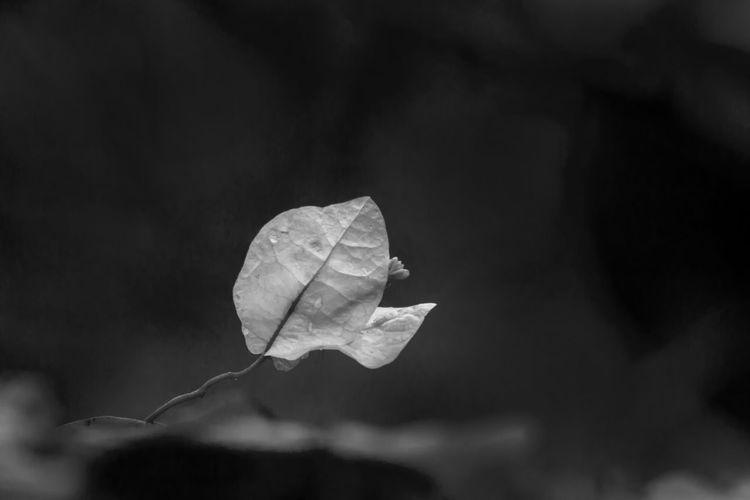 Close-up of leaf on flowering plant