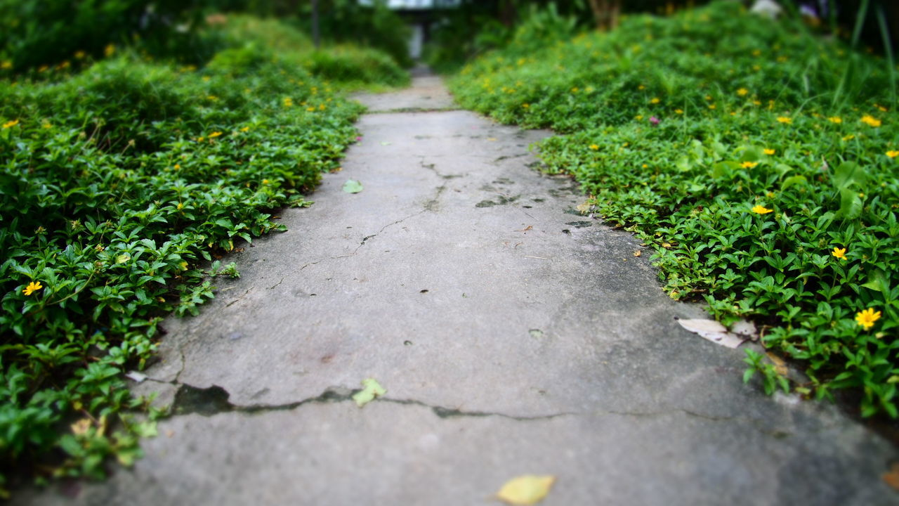 Surface Level Of Footpath Along Plants