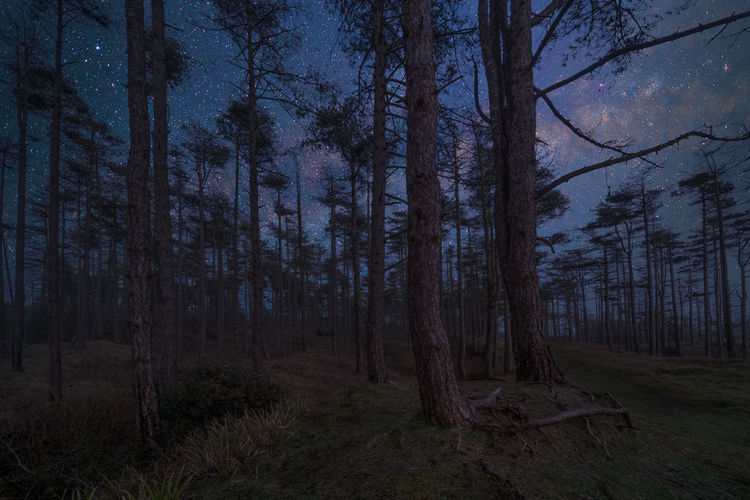 Trees in forest against sky at night