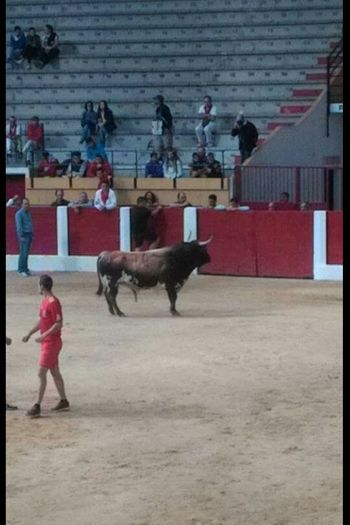 Men Full Length One Animal Playing With El Torro Torro Iscar Valladolid Castillayleon Fun With Bull Plazamayor Plaza De Toros Only Playing With Bulls España España🇪🇸