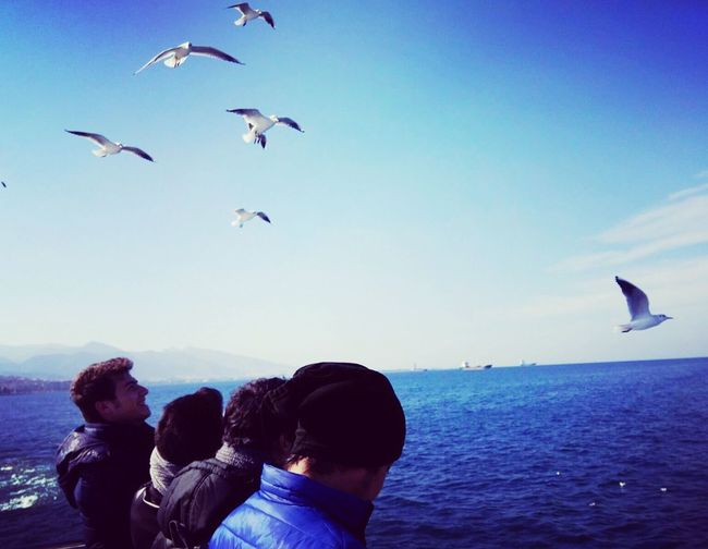 Bird Sea Animals In The Wild Togetherness Water Blue Leisure Activity Seagull Wildlife Scenics Tranquility Tranquil Scene Non-urban Scene Beauty In Nature Nature Vacations Day Sky Majestic
