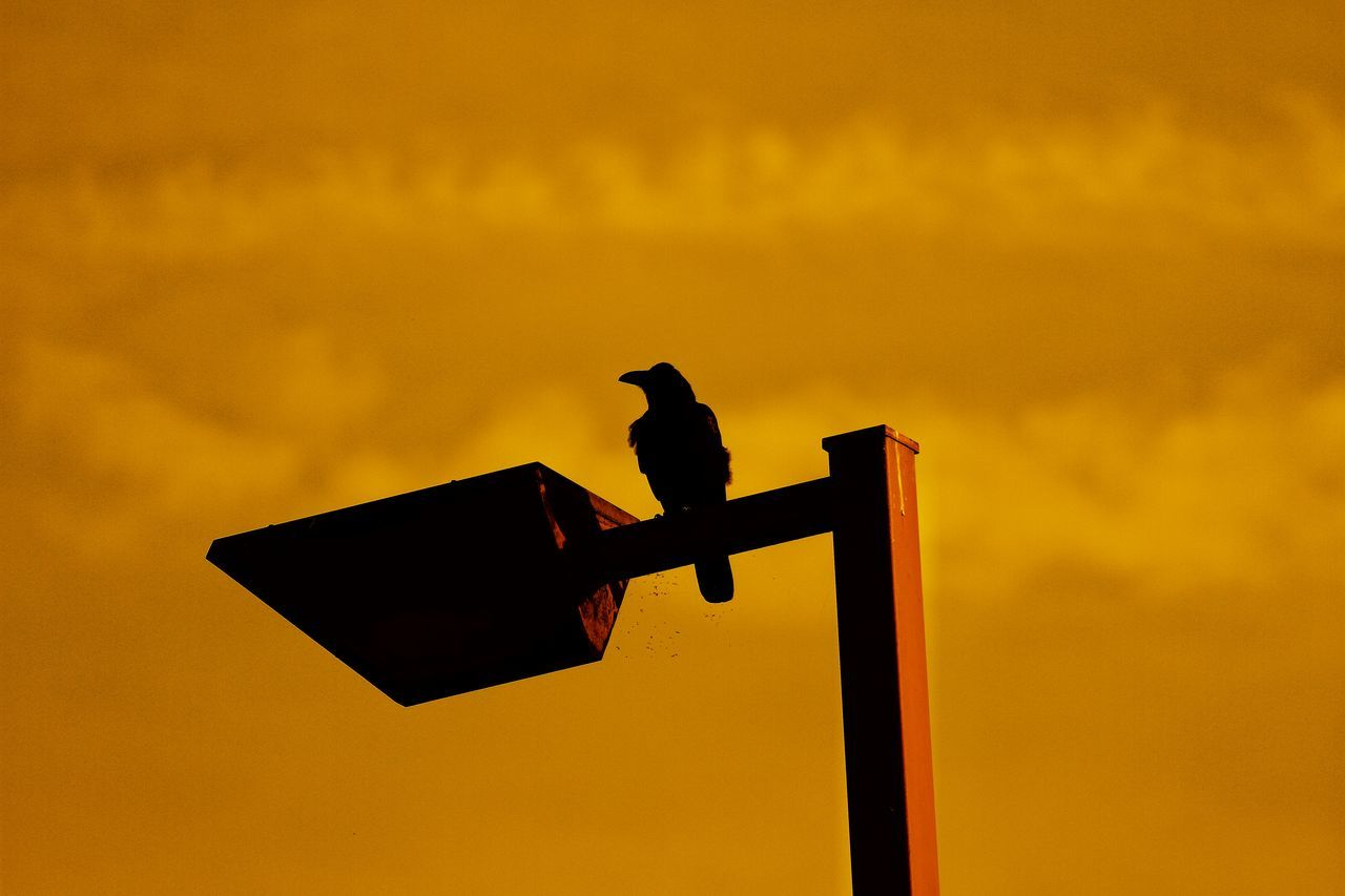 sunset, low angle view, silhouette, orange color, animals in the wild, animal themes, guidance, bird, no people, outdoors, direction, perching, sky, one animal, communication, animal wildlife, nature, yellow, road sign, raven - bird, day