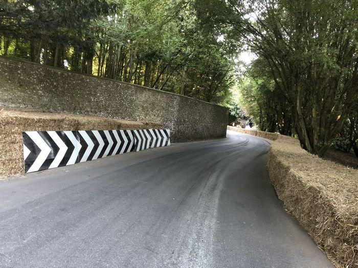Tree Road Plant