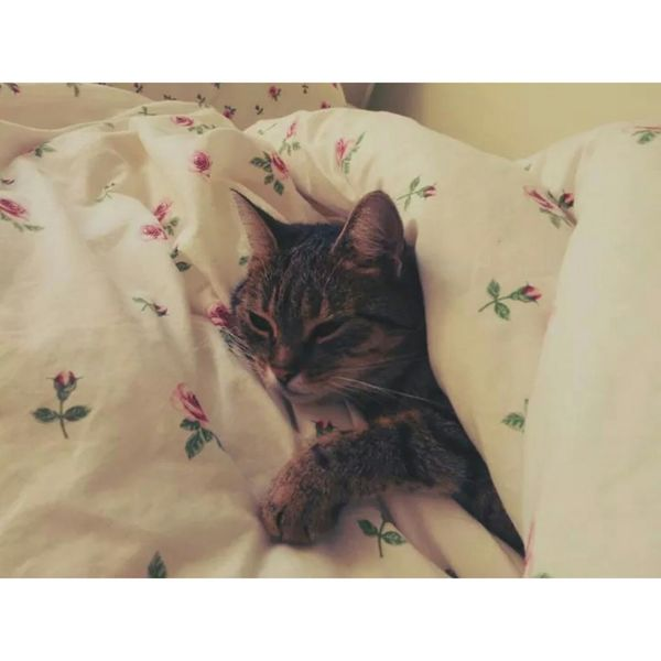 Cat Sleeping Cat MyLove❤ My Kitty Cat