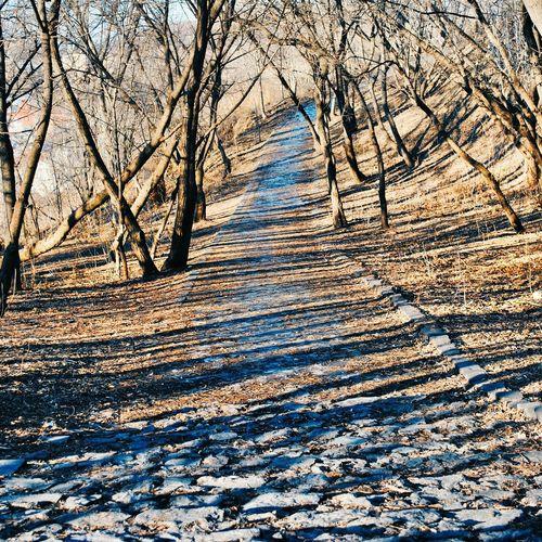 пейзажной алея