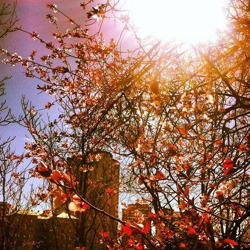 Un lunes festivo con sol es muy molón Monday Sun Ojoprimavera