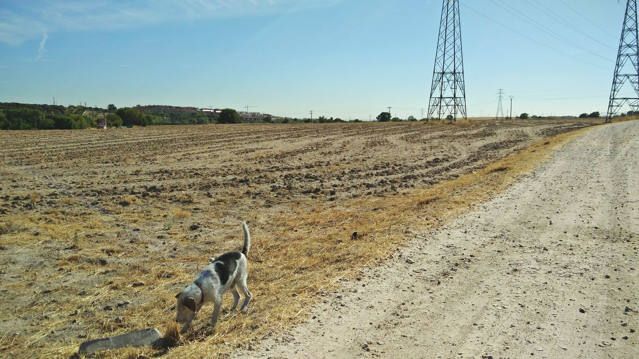 animal themes, day, field, one animal, no people, domestic animals, outdoors, mammal, dog, landscape, nature, sky, pets, electricity pylon
