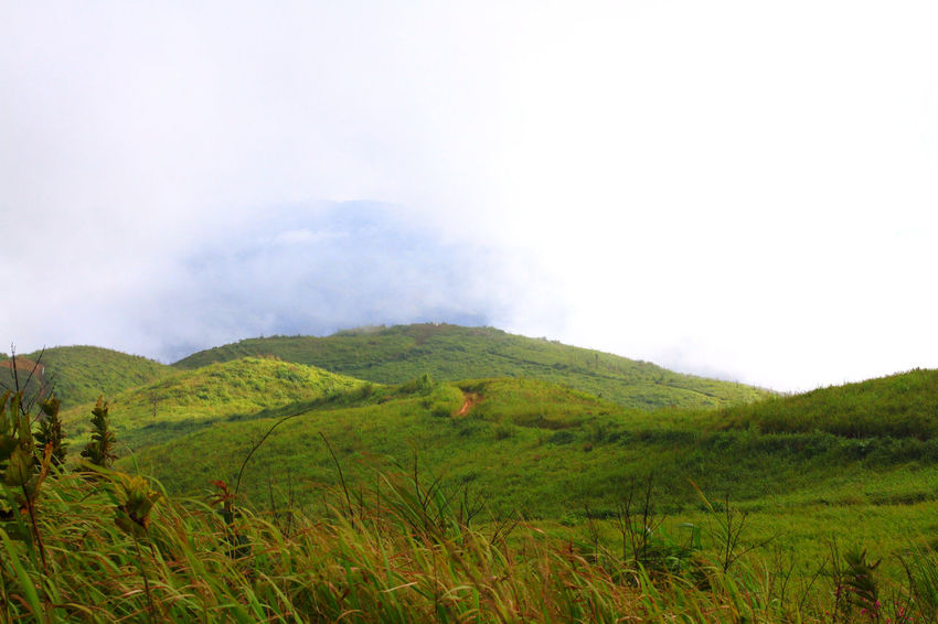 Mountain and the mist it's rain forest and fog Hiking Trail Tree Meadowflowers Flower Grass Field Sunset Rimlight Light In Nature Blue Sky Forest Natural Nature Grass Nature Photography Mountain Adventure Plants And Flowers Landscape Rain Forest Hill Fog Mist