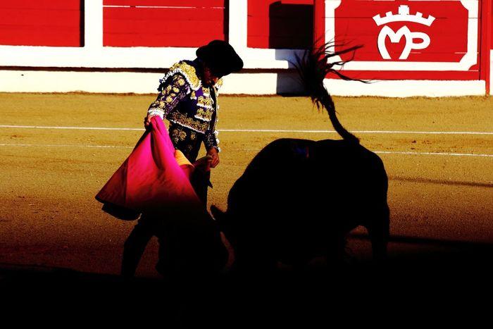 Talavante toreando en la luz clavadito en la sombra. Talavante fighting in the light with his feet in the shade. Colors Pink Animals SPAIN