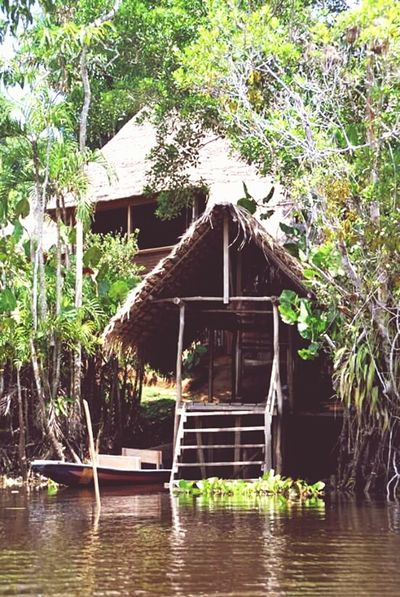 Jungle accommodation in the Amazon. Jungle Hut Amazon Ecuador Rainforest