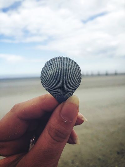 Shells Seashell