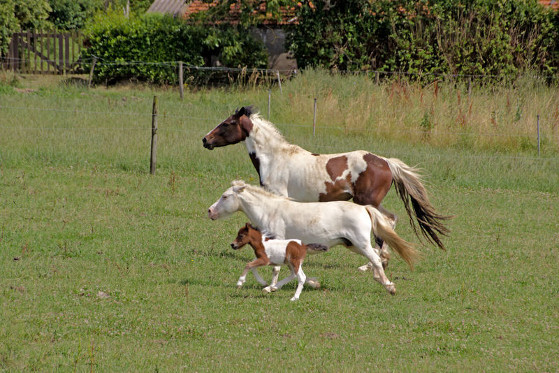 Happy family Animal Themes Beauty In Nature Domestic Animals Field Grass Grassy Horses No People Outdoors Rural Scene Landascape Greenery Nature_collection Running Horses Colour Of Life