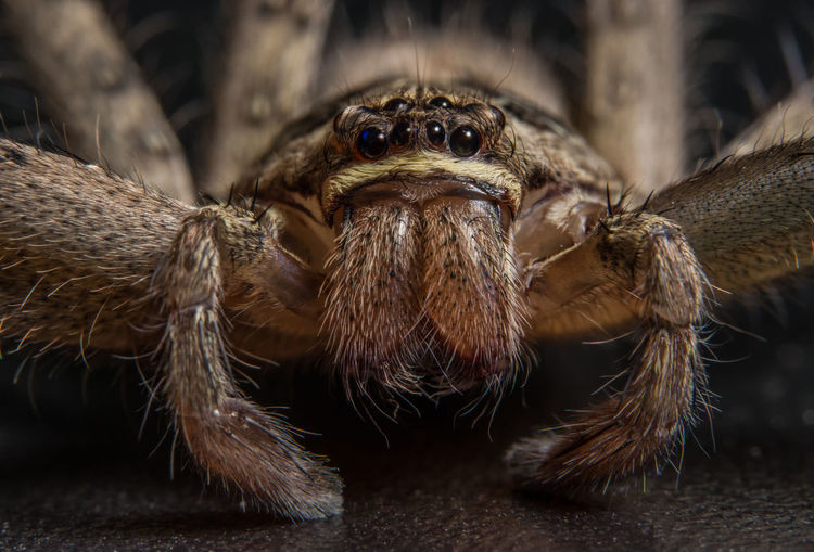 Close-up of spider