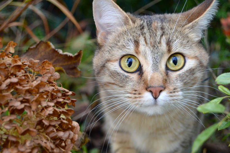 A Cat In The Way A Cat Is A Cat Is A Cat Animal Themes Cat Cat In Garden Cats Close-up Day Domestic Animals Domestic Cat Eyes Of A Cat Feline Mammal No People One Animal Outdoors Pets Portrait Whisker Yellow Eyes