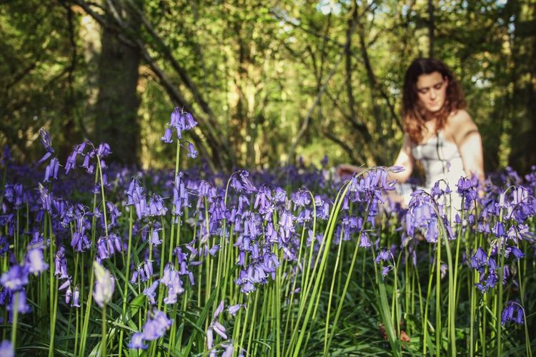 Close-up of fresh purple bluebells against woman sitting in forest