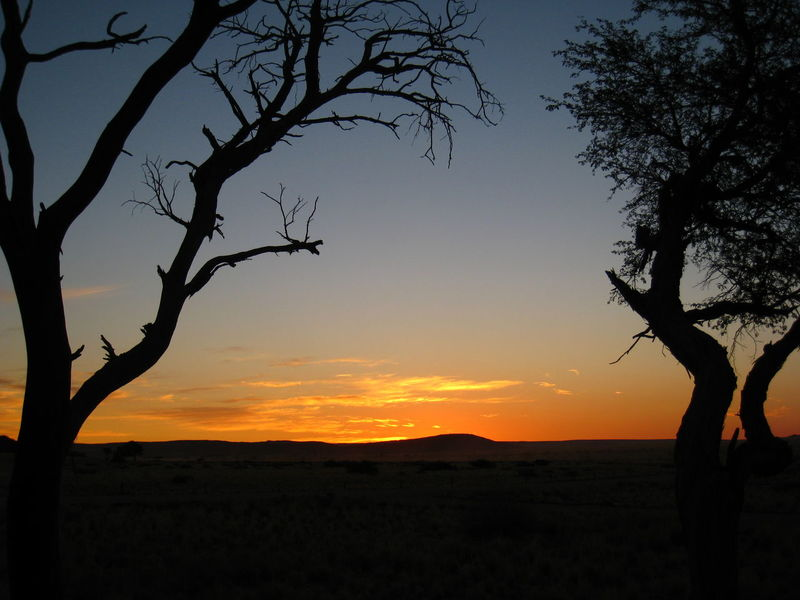 Bare Tree Beauty In Nature Desert Sunset Horizon Over Land Idyllic Landscape Namib Desert Namib Naukluft National Park Namibia Nature Non-urban Scene Orange Color Scenics Silhouette Sky Sunset Tranquil Scene Tranquility Travel Travel Photography Tree Africa Landscapes With WhiteWall 43 Golden Moments Colour Of Life