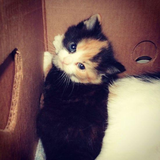 Baby nada. Scheetie Throwback Whileago Ratemykitten love kitten cat sweet