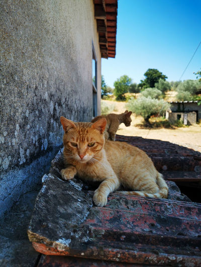 Portrait of cat lying on wall