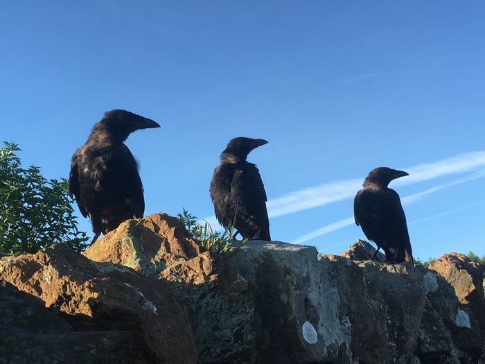 Ravens Perching On Rock Formation Against Sky