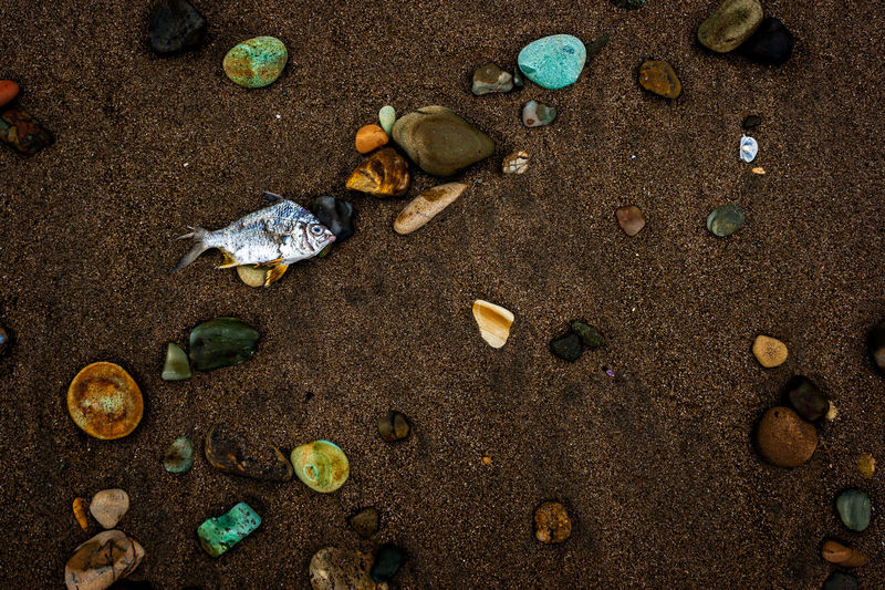 High angle view of dead fish with pebbles on sand at beach