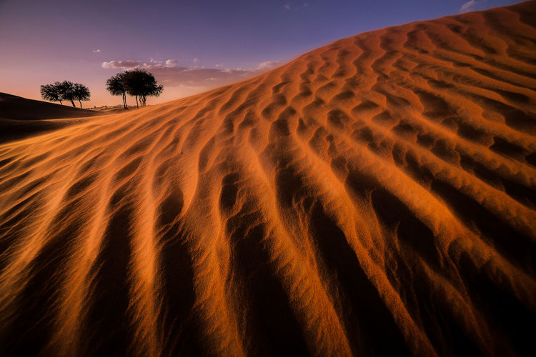 amazing landscape Capture The Moment Cat Desert Landscape Landscape_photography Sunset Working