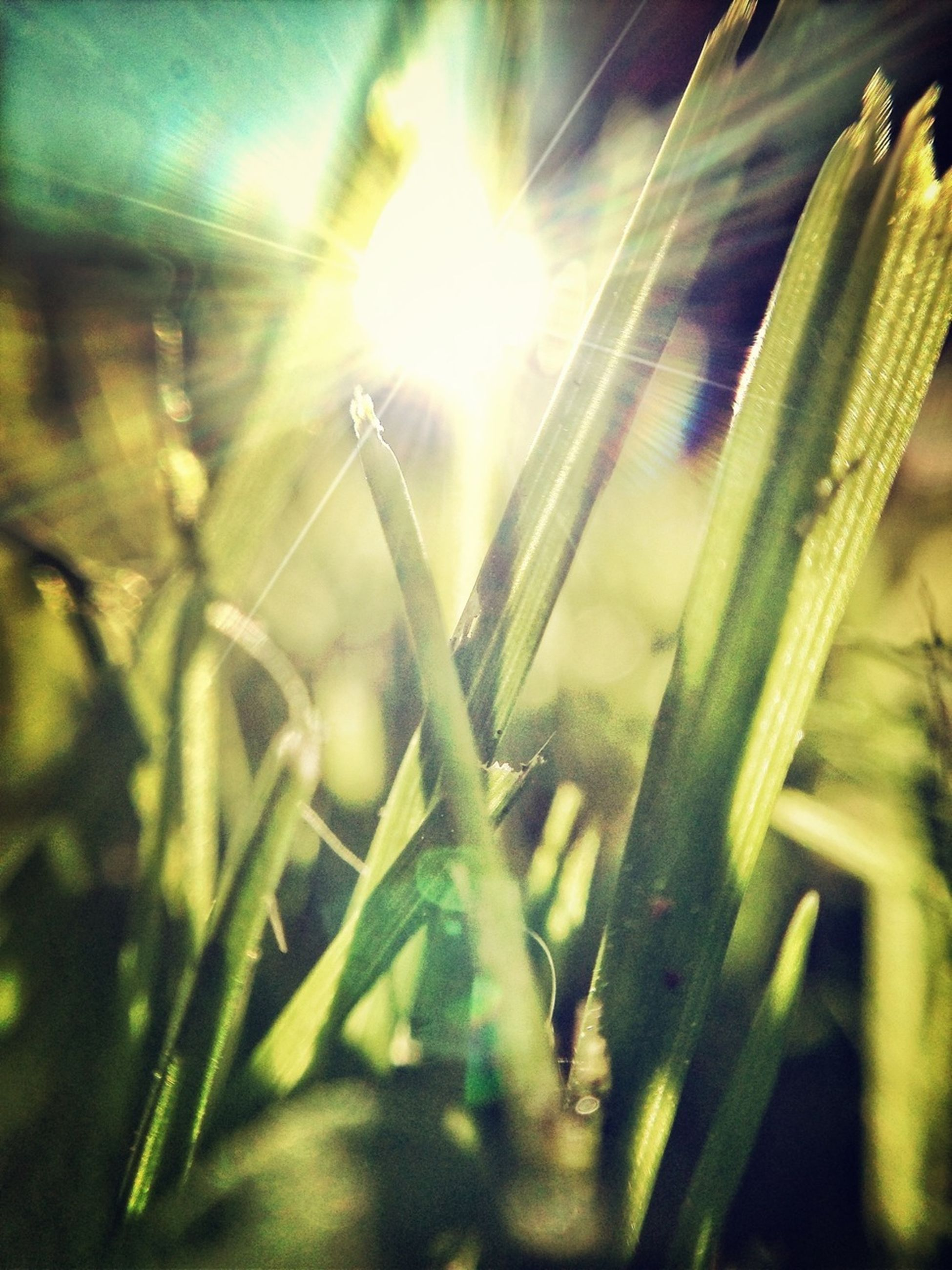 growth, plant, sun, sunlight, lens flare, sunbeam, close-up, nature, green color, focus on foreground, grass, selective focus, beauty in nature, blade of grass, field, leaf, growing, outdoors, tranquility, day