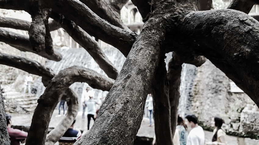 Ancient Civilization Architecture Built Structure Close-up Day Focus On Foreground Nature Outdoors Real People Tree Tree Trunk