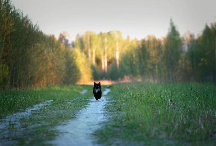 Dog Walking On Narrow Footpath At Field
