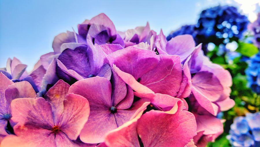 flowers 💮