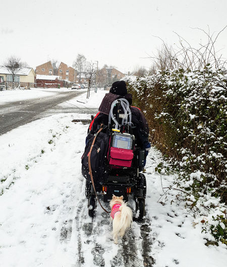 Cold Temperature Snow Winter Pets Canine Dog Snowing Outdoors Wheelchair Chiuhuahua