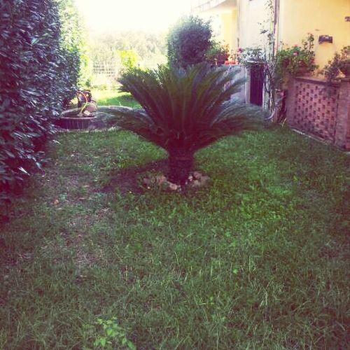 La Mia Casa Giardino