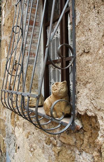 High angle view of an animal on wall