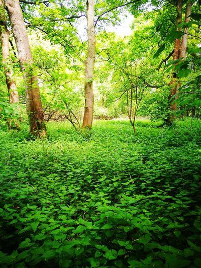 Tree Leaf Grass