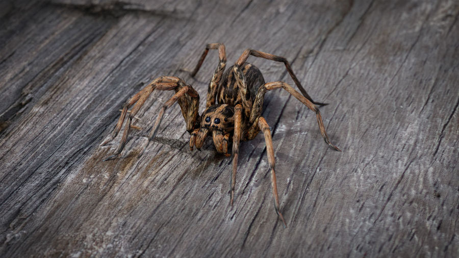 High angle view of spider on wood
