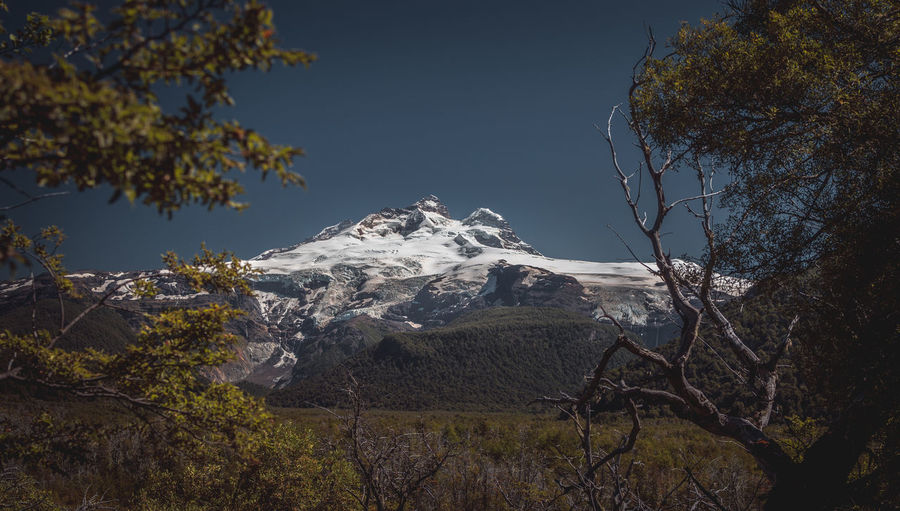 Trees against snowcapped mountains