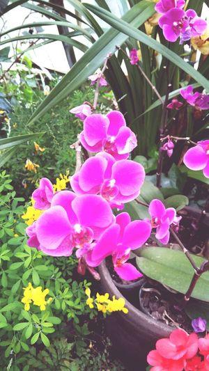 Daliy Snap Gpro2 일상 Spring Yeah Springtime! 봄 꽃 Flower