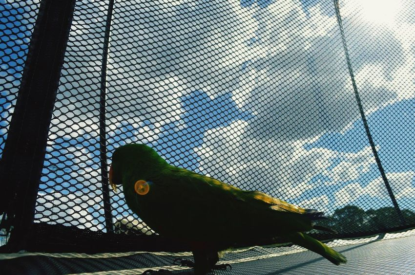 Animal Themes Budgerigar One Animal Bird Animals In The Wild Cage Parrot Parakeet Animal Wildlife No People Green Color Nature Low Angle View Perching Indoors  Day Close-up