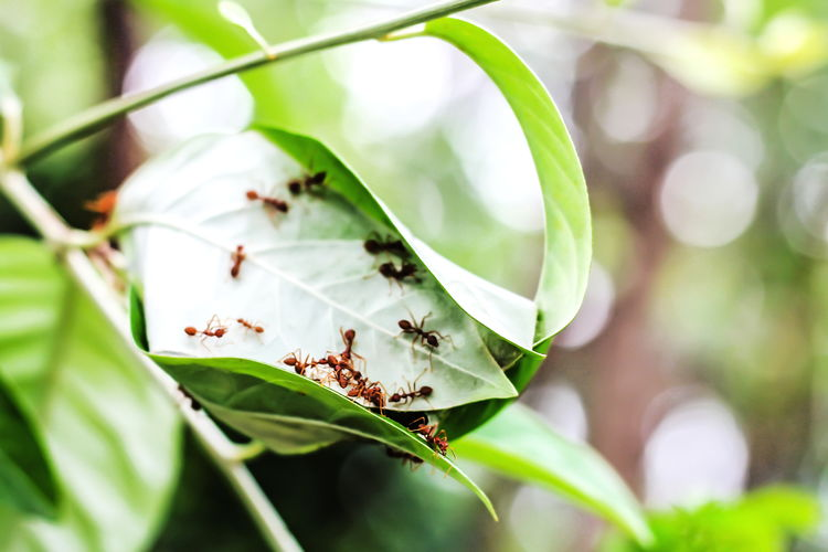 Ants are