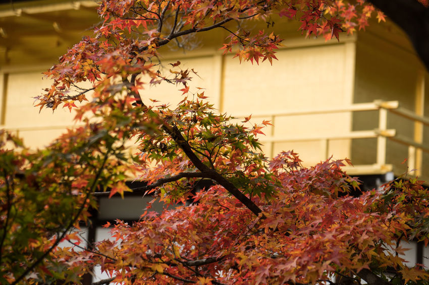 Architecture Beauty In Nature Building Exterior Built Structure Close-up Day Fall Flower Fragility Freshness Growth Nature No People Outdoors Sunset Tree