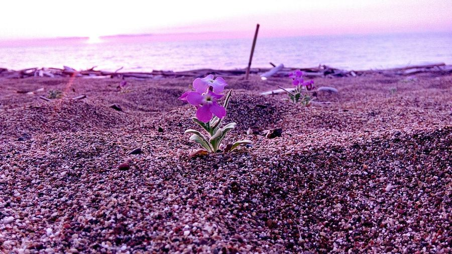 Spring's beauty... Nature Sunset Purple Beauty In Nature Sea Day Plant Flower First Eyeem Photo