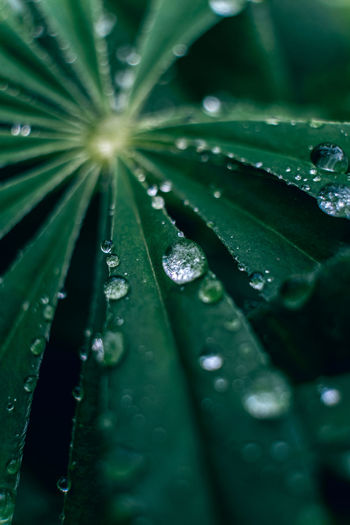 Close-up of wet leaves during rainy season