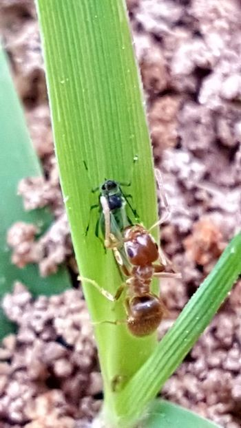 Ant Ant Photography Taking Photos Insect Macro  Insect Photography Check This Out Photography #photo #photos #pic #pics #tagsforlikes #picture #pictures #snapshot #art #beautiful #instagood #picoftheday #photooftheday #color #all_shots #exposure #composition #focus #capture #moment April Showcase Showcase April 2016 Showcase April Eyeemphotography EyeEm Best Shots EyeEm Gallery Photography First Eyeem Photo Getty+EyeEm Collection Getty X EyeEm Images Eyeemphotography Phonephotography Getty Images Getty & Eyeem EpicShotPhotography Epic Shot Photography