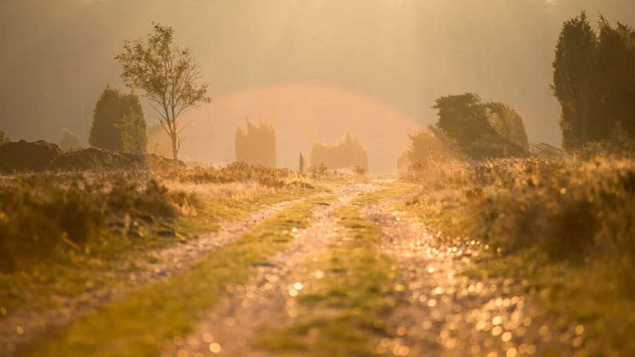 Wandering in the Morning National Park Direction Dirt Road Dust Environment Fog Footpath Land Landscape Lens Flare Nature No People Outdoors Panoramic Plant Road Scenics - Nature Sunlight Sunrise The Way Forward Tranquility Tree