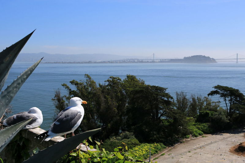 A perch with a view A Bird's Eye View Alcatraz Animal Themes Bay Bird Clear Sky Gull Ocean One Animal Perching San Francisco Sea View Water Wildlife