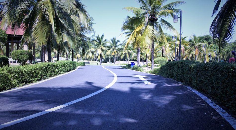 palm tree road