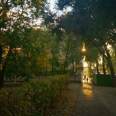 Осеньсолнце шикарная Погода Autumn
