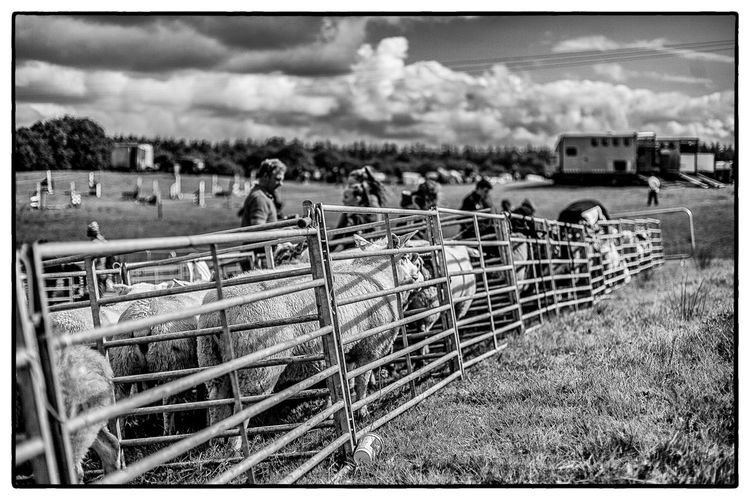 Agricultural show in Swinford, Ireland. August 2017 Blackandwhite Livestock Animals Field Sky Outdoors Day Large Group Of People Nature Grass People